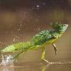 LizardMessiah