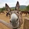 Unintelligent Donkey