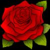 Gentle Rose of Radiant Waffles