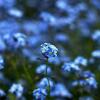 Springmaid