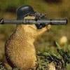 HamsterDesTodes
