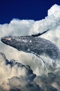 Clouds of Fauna