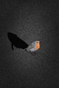 Songbird - a Kammi Kettu story