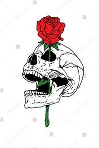 The Crimson Colored Rose