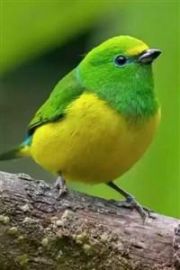 Not your average Bird