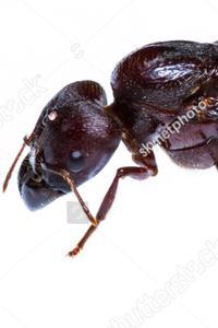 Hive Consort
