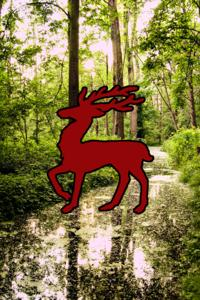 Red Stag's Trail