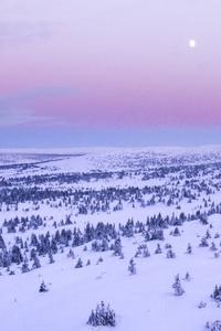 The Arctic Paragon
