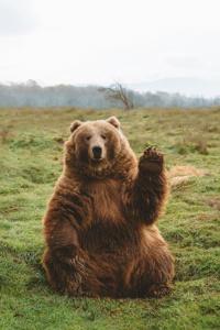 Ursus the Unbearable